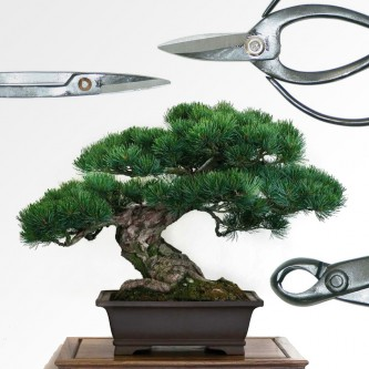 Herramientas para bonsai
